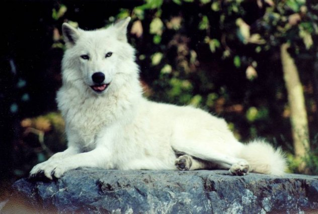 The Wolf in Non Fiction Books: The Wolf in Non Fiction Books